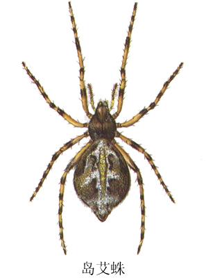壁纸 昆虫 蜘蛛 桌面 297_400 竖版 竖屏 手机