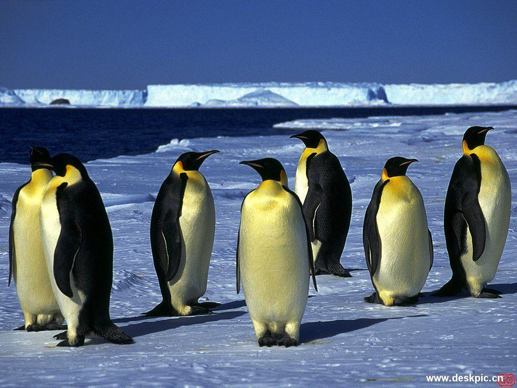 编辑本段南极动物   南极是地球上唯一一个至今没有