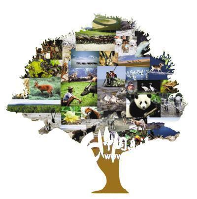 该公约旨在保护濒临灭绝的植物和动物