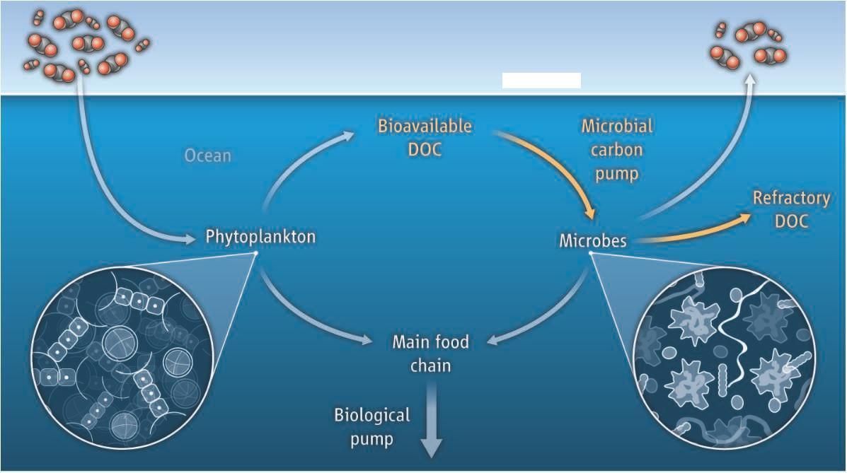 随后在植物→滤食动物→肉食动物的生物链演进过程中