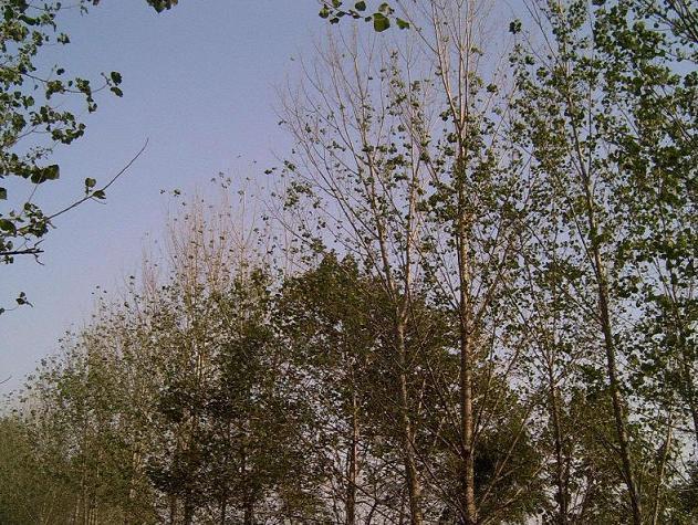 树木减少的危害实例