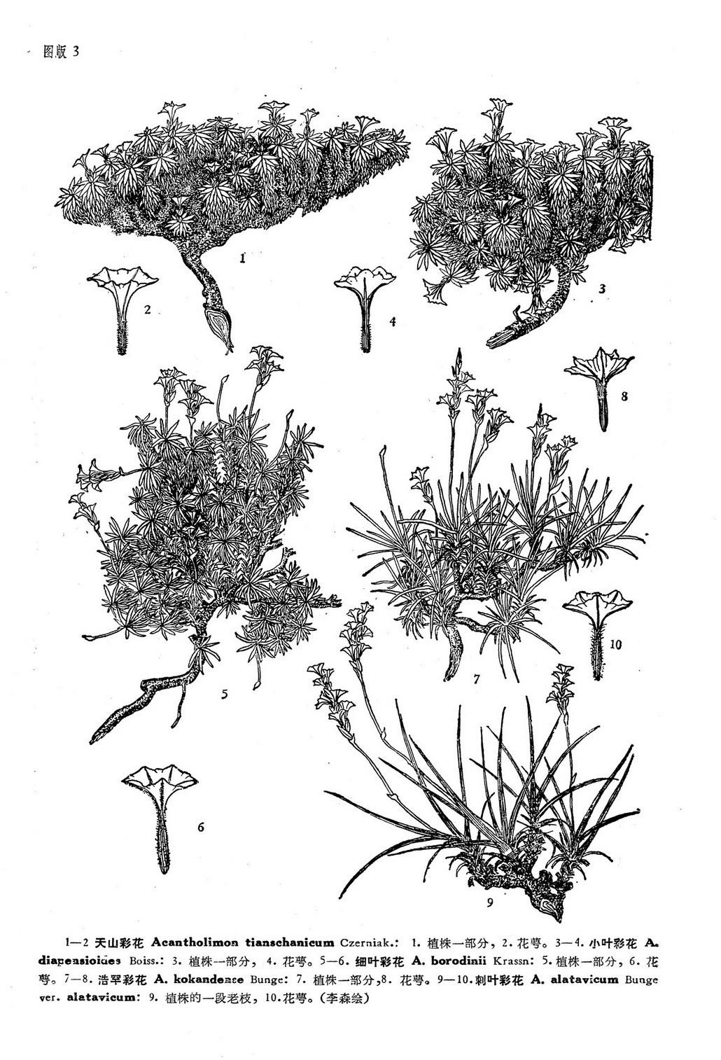 彩花素描步骤图片