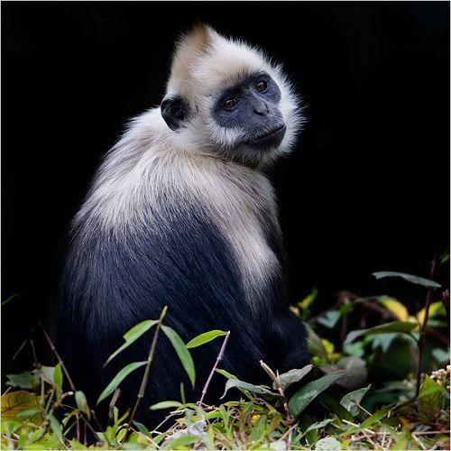 保护区内动物种类繁多