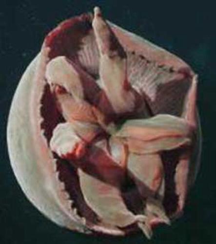 水母是低等的腔肠动物