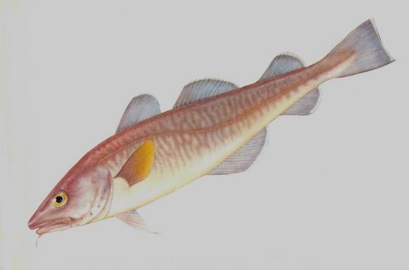 挪威海水域跻身世界最佳渔场之列,是200多种鱼类,贝类的栖息地.