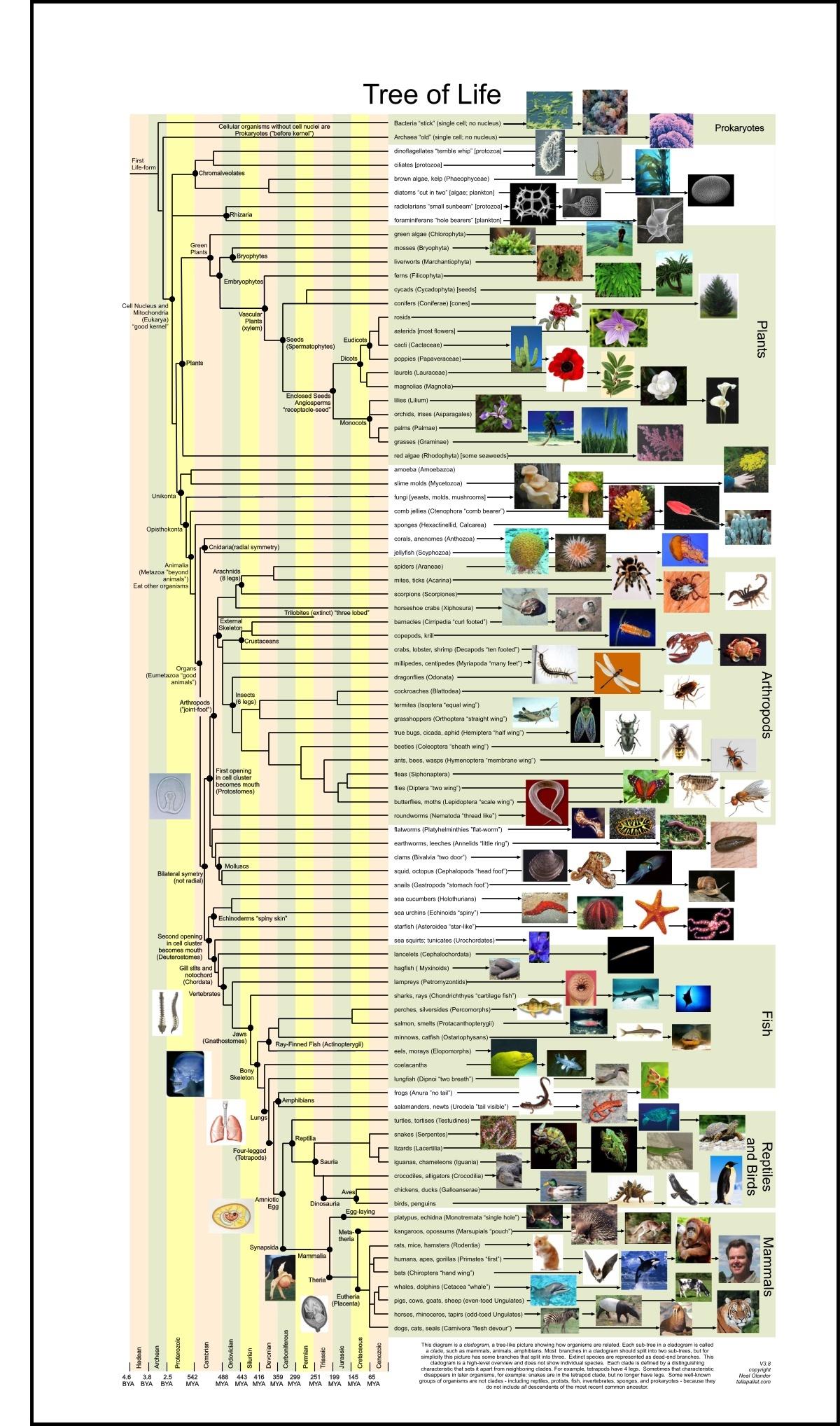 物种进化树 系统进化树 物种进化路线图 如何分析一个基因...