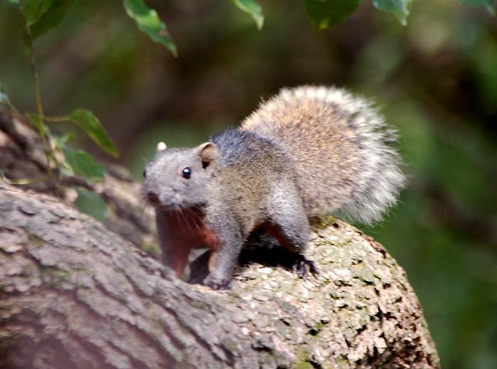 秋天森林中的松鼠彩铅画分享展示