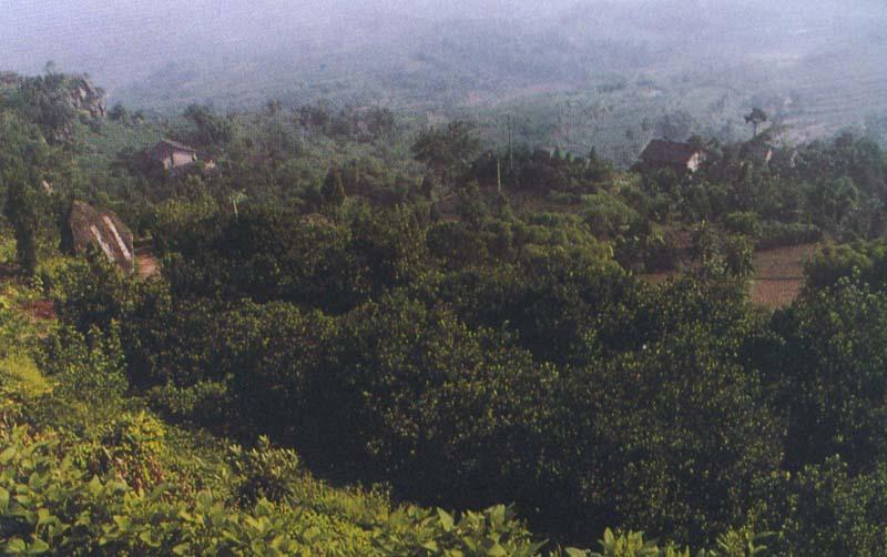 四川广安县风景图