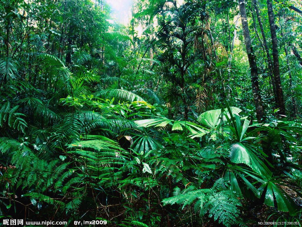 亚马孙森林被称为