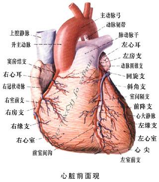 肺慢性淤血绘图