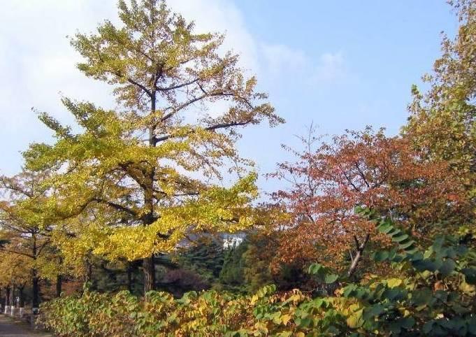 青岛植物园_360百科