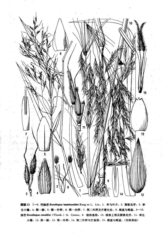 竹丛手绘平面图例