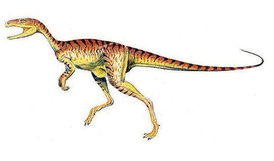 长得最像龙的动物