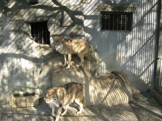 青岛动物园猛兽笼舍
