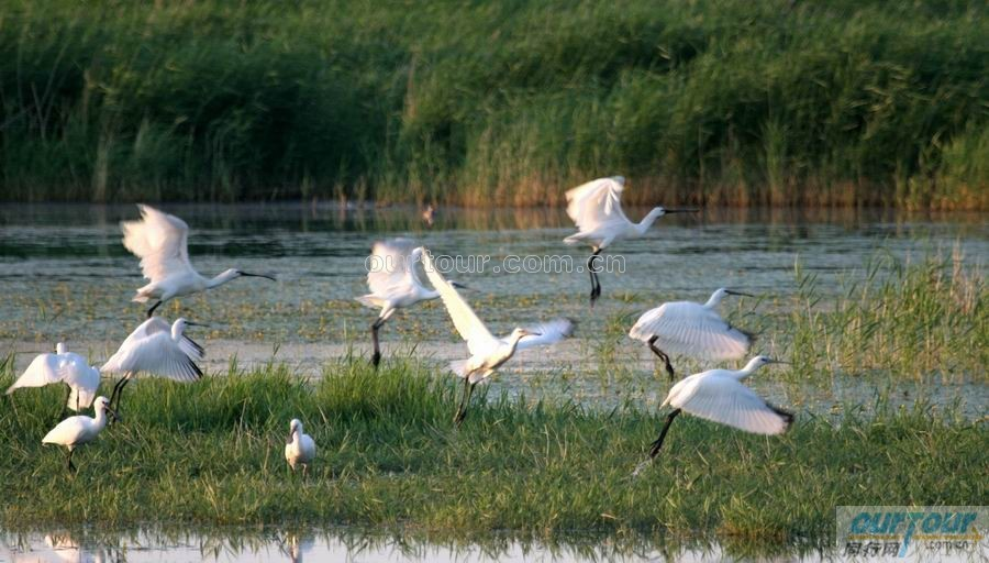 达赉湖自然保护区:在动物地理区划上属古北界